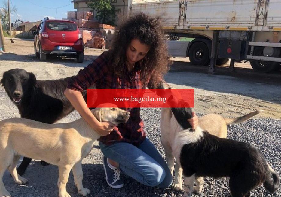Yasemin hoca, maaşını sokak hayvanlarına harcıyor
