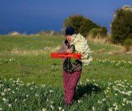 Karaburun Yarımadası'nda yetişiyor! Taleplere yetişemiyorlar…