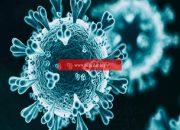 Kovid-19 antikorları virüse karşı bağışıklık kazanılmasını sağlayabilir